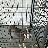 Adopt A Pet :: Roxy - Las Vegas, NV