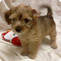 Adopt A Pet :: Whimsy (ARSG) - Santa Ana, CA
