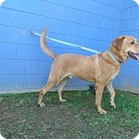 Adopt A Pet :: Rook - Randleman, NC