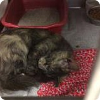 Adopt A Pet :: Silvia - Janesville, WI