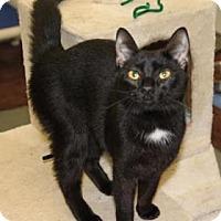 Adopt A Pet :: Skinny - Greensboro, NC