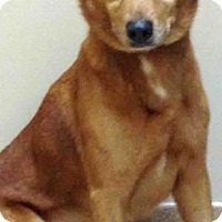 Adopt A Pet :: Scrappy - Oswego, IL