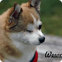 Adopt A Pet :: Wewolfe - Barriere, BC