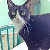 Adopt A Pet :: Puffin - Fairfax, VA
