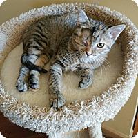 Adopt A Pet :: Calypso - Chaska, MN