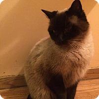 Adopt A Pet :: Dingle - Okotoks, AB