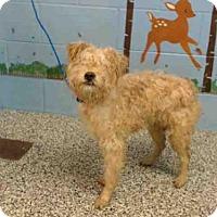Adopt A Pet :: A500817 - San Bernardino, CA