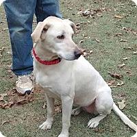 Adopt A Pet :: Lillie - Plano, TX