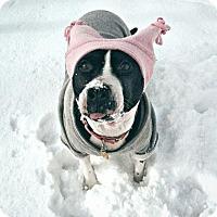 Adopt A Pet :: Strudel - Cleveland, OH