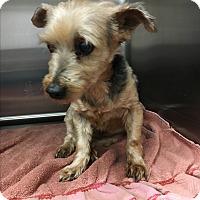 Adopt A Pet :: Fritter - Phoenix, AZ