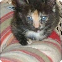 Adopt A Pet :: kitten - Etobicoke, ON