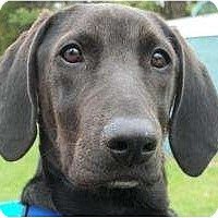 Adopt A Pet :: Carson- Pending! - kennebunkport, ME