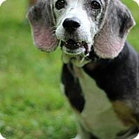 Adopt A Pet :: Sunny - Tinton Falls, NJ