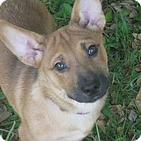 Adopt A Pet :: Waldo - Portland, ME