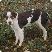Adopt A Pet :: TN/Addy - St. Louis, MO