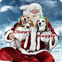 Adopt A Pet :: Maggie & Chewy-BONDED PAIR - Portland, OR