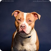 Adopt A Pet :: Deuce - Blacklick, OH