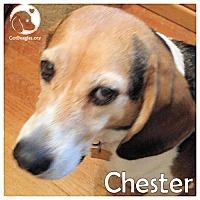 Adopt A Pet :: Chester - Novi, MI