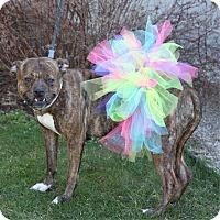 Adopt A Pet :: Buttercup - South Haven, MI