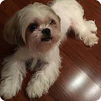 Adopt A Pet :: Trinity - Ft. Lauderdale, FL