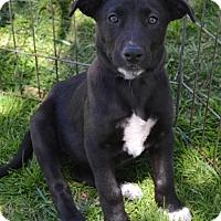 Adopt A Pet :: Rexie - Adopted! - San Diego, CA