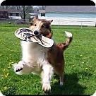 Adopt A Pet :: Buddy (2)