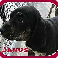 Adopt A Pet :: Janus - Clear Lake, IA