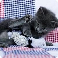 Adopt A Pet :: Martin - Little Rock, AR