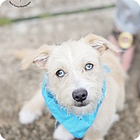 Adopt A Pet :: Frankie - Kingwood, TX