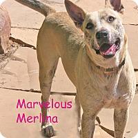Adopt A Pet :: Merlina - Poway, CA