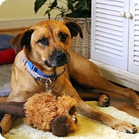Adopt A Pet :: Cobie *Foster Me - Richmond, VA