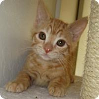 Adopt A Pet :: Purdy - San Jose, CA