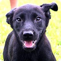 Adopt A Pet :: Paddy - Glastonbury, CT