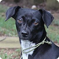 Adopt A Pet :: Samantha - Centerville, TN