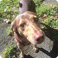 Adopt A Pet :: Brimstone - Florence, KY