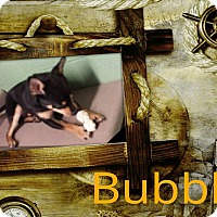 Adopt A Pet :: bubbles - Gadsden, AL