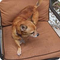 Adopt A Pet :: Olly - tampa, FL