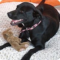 Adopt A Pet :: Sweetpea - san diego, CA