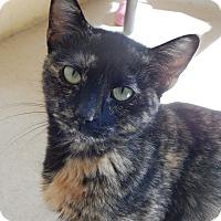 Adopt A Pet :: Euphie - Chula Vista, CA