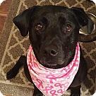 Adopt A Pet :: Sadie #5