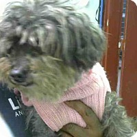 Adopt A Pet :: POPPERS - Atlanta, GA