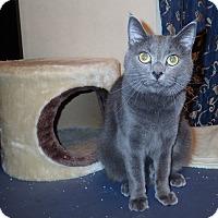 Adopt A Pet :: Scarlette Marie - North Wilkesboro, NC