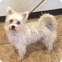 Adopt A Pet :: Harry - Oak Ridge, NJ