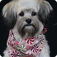 Adopt A Pet :: Shaggy - SAN PEDRO, CA