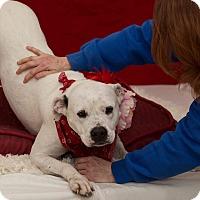 Adopt A Pet :: Ariel - Flint, MI