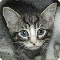 Adopt A Pet :: Cat FT01 - Rocky Mount, NC