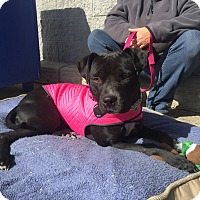 Adopt A Pet :: Autumn - Trenton, NJ