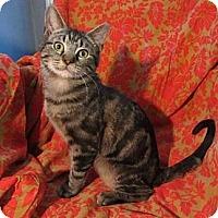 Adopt A Pet :: Bosley - Felv+ - Oxford, NY