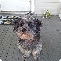 Adopt A Pet :: Deacon - Cumberland, MD