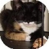 Adopt A Pet :: Kiri - Vancouver, BC